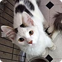 Adopt A Pet :: Gable - Escondido, CA