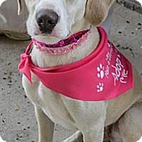 Adopt A Pet :: Holly - Piqua, OH