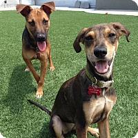 Adopt A Pet :: Kiki - Orange, CA