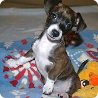 Adopt A Pet :: Gretal - Marietta, GA