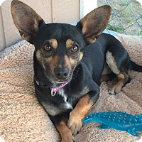 Adopt A Pet :: Chipper - Lake Elsinore, CA