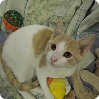 Adopt A Pet :: Saddle - Medina, OH