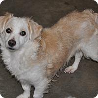 Adopt A Pet :: CeCe - Tumwater, WA