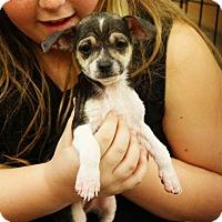 Adopt A Pet :: Charles - Rancho Cucamonga, CA