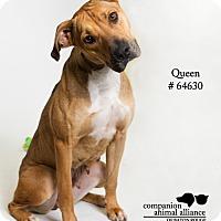 Adopt A Pet :: Queen - Baton Rouge, LA