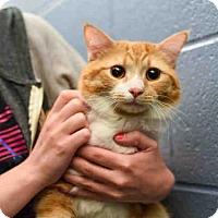 Adopt A Pet :: TIGER - Pittsburgh, PA