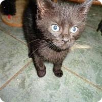 Adopt A Pet :: Bear - Breinigsville, PA