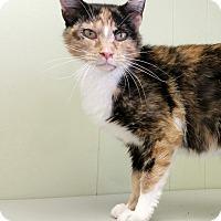 Adopt A Pet :: C16 - Indianola, IA