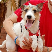 Adopt A Pet :: Ferdinand - Las Vegas, NV