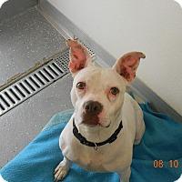 Adopt A Pet :: MOXIE - Sandusky, OH