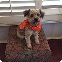 Adopt A Pet :: Bisou - La Jolla, CA