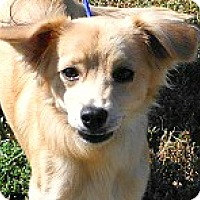 Adopt A Pet :: Bailey-ADOPTION PENDING - Boulder, CO