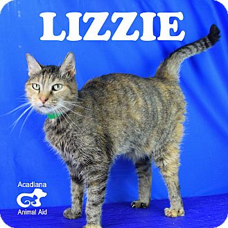 Domestic Shorthair Cat for adoption in Carencro, Louisiana - Lizzie