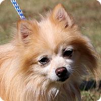 Adopt A Pet :: Casper~meet me~ - Glastonbury, CT