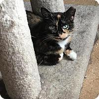 Adopt A Pet :: Joon - St. Paul, MN