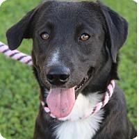 Adopt A Pet :: Connie - Red Bluff, CA