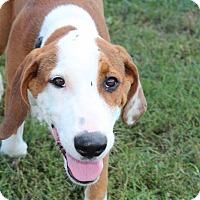 Adopt A Pet :: Rosco - Harmony, Glocester, RI