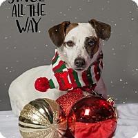 Adopt A Pet :: BALMY - Methuen, MA