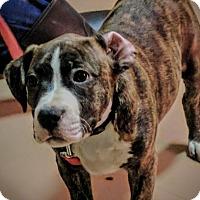 Adopt A Pet :: Mulder - Foster, RI