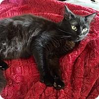 Adopt A Pet :: Fred - Arlington/Ft Worth, TX
