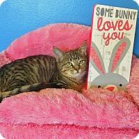 Adopt A Pet :: Miss Purr - Glendale, AZ