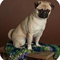 Adopt A Pet :: Sid - Phoenix, AZ