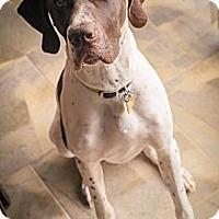 Adopt A Pet :: Gauge - Streetsboro, OH