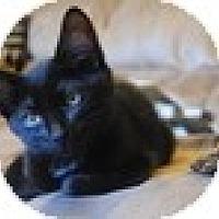 Adopt A Pet :: Jason - Vancouver, BC