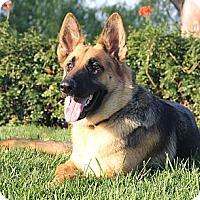 Adopt A Pet :: Geneva - Laguna Niguel, CA