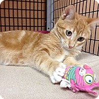 Adopt A Pet :: Simba - Deerfield Beach, FL