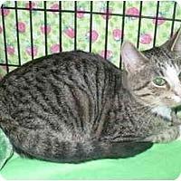 Adopt A Pet :: Firecracker - Colmar, PA