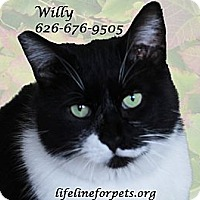 Adopt A Pet :: Winning WILLY - Monrovia, CA