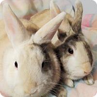 Adopt A Pet :: Marigold and Clover - Hillside, NJ