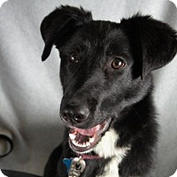 Adopt A Pet :: Esme - Minneapolis, MN