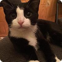 Adopt A Pet :: Tumble - Hamilton, ON