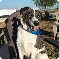 Adopt A Pet :: Jax - Patterson, CA