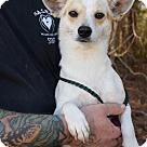 Adopt A Pet :: Kiwi