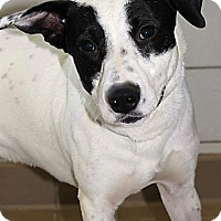 Adopt A Pet :: Marley (Westhampton) - New York, NY