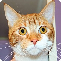 Adopt A Pet :: Pinky - Ann Arbor, MI