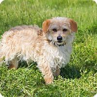 Adopt A Pet :: Shaggy - Lodi, CA