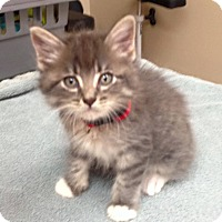 Adopt A Pet :: Whiskey - Carencro, LA