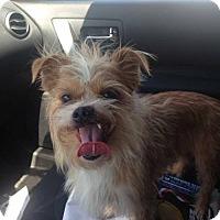 Adopt A Pet :: Webster - Houston, TX