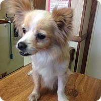 Adopt A Pet :: Skippy (CP) - Fremont, CA