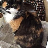 Adopt A Pet :: Kira - Mt Pleasant, PA
