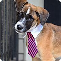 Adopt A Pet :: Gumbeaux - Baton Rouge, LA