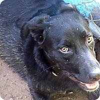Adopt A Pet :: Dagwood Evans - Staunton, VA