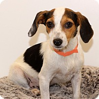 Adopt A Pet :: Sparkles~meet me~ - Glastonbury, CT