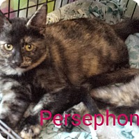 Adopt A Pet :: Persephone - Hamilton, ON
