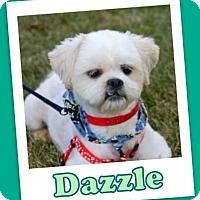 Adopt A Pet :: Dazzle Ranger - Pataskala, OH