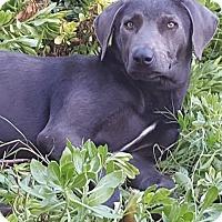 Adopt A Pet :: Dusty - San Diego, CA